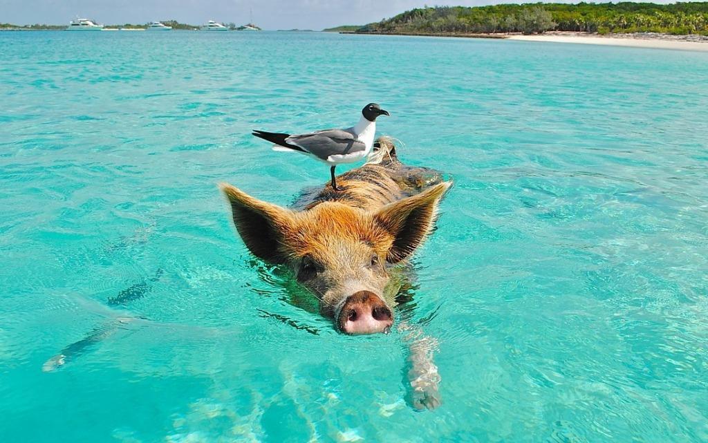 """""""Kein Schwein ruft mich an.."""" oh Schreck, negatives Feedback?"""